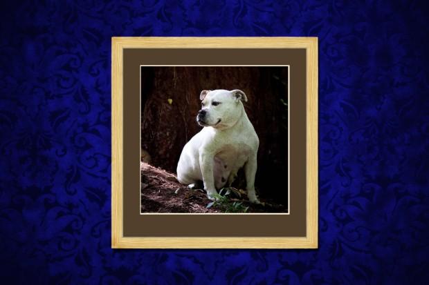 pet photography gloucestershire bristol